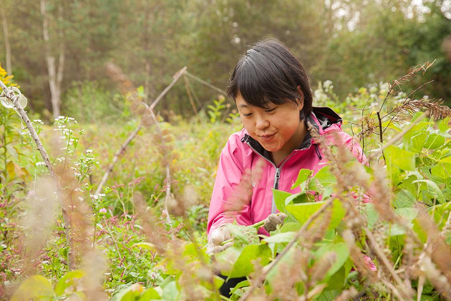 自然農の畑で草むしり