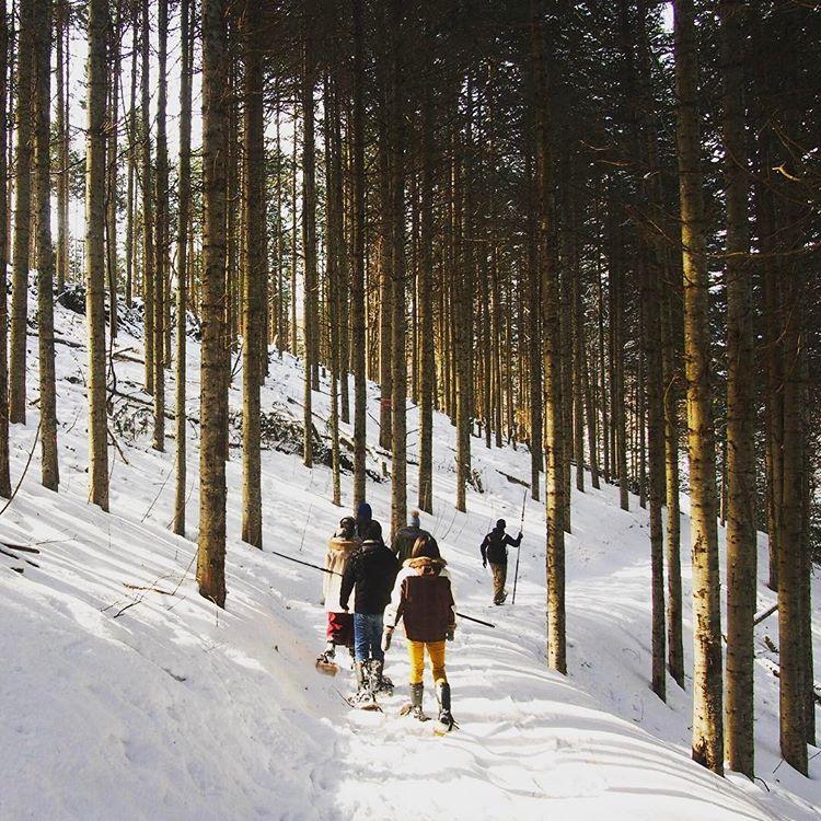 季節の森さんぽ